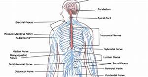 Physiological Informations  Human Body  How Does It