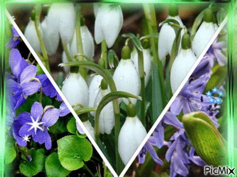 si鑒e printemps entraînement en ligne fle fleurs de printemps diaporama et jeu en ligne expressions imagées avec des noms de fleurs
