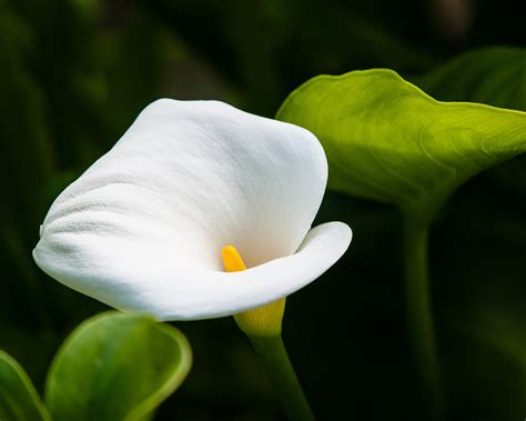 names of different lilies different types of flowers with pictures beautiful flowers