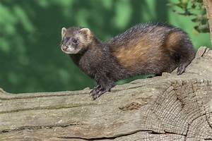Temperate Rainforest Animals List