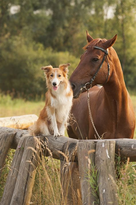 Horses And Dogs Together Free Wallpaper