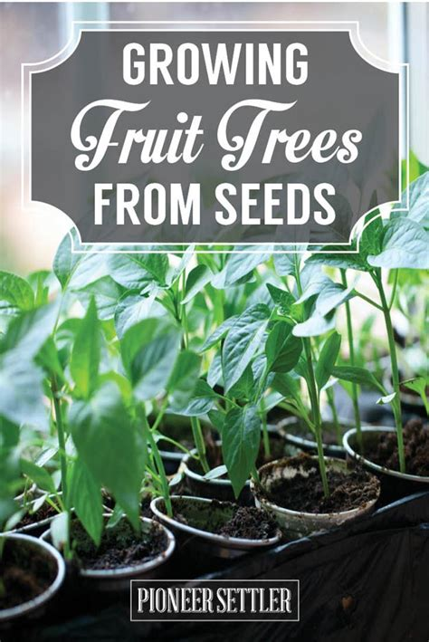 growing fruit trees  seeds  save homesteading