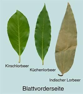 Bambus Braune Blätter : kirschlorbeer mit maschine schneiden bau von hausern und hutten ~ Frokenaadalensverden.com Haus und Dekorationen