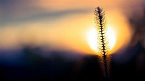 nature sun silhouette plants bokeh macro blurred