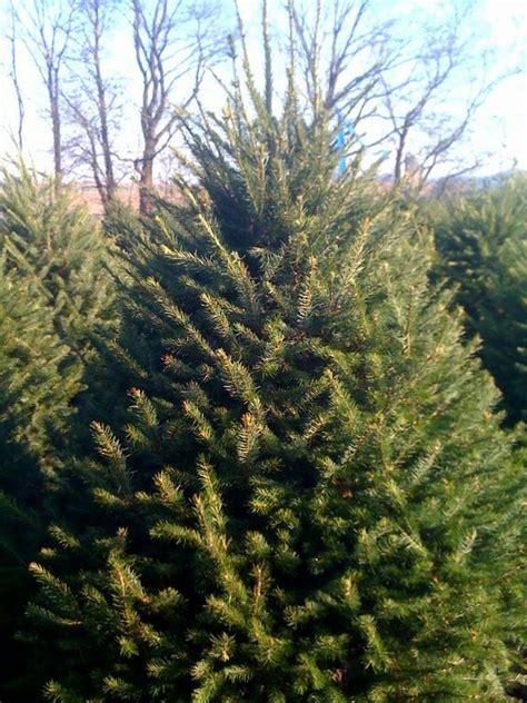 clarks christmas tree farm cochranville pa 19330 610 358 4933