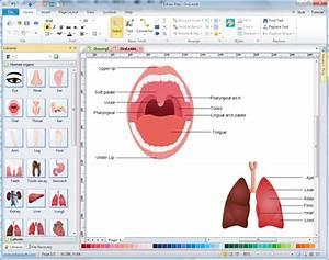 Human Organs Diagrams