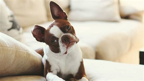 Best Appartment Dogs by Best Apartment Dogs