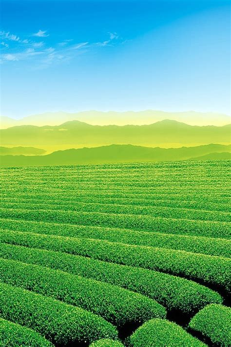 beautiful tea garden wallpaper allwallpaper in 9427