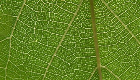 leaf cell structure sciencing