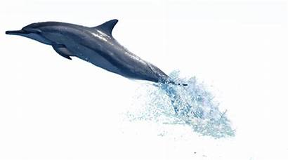 Dolphin Posted