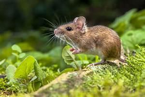Maus In Wohnung : der winter ist da und mit ihm m use und ratten mausklick ~ Markanthonyermac.com Haus und Dekorationen