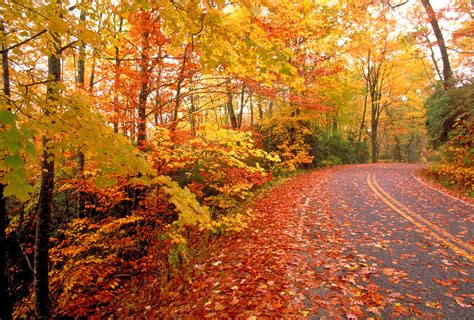Best Time For Fall Colors  Wmbfnewscom, Myrtle Beach