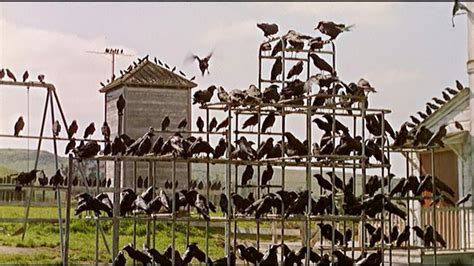 reason  alfred hitchcock incorporated birds   movies