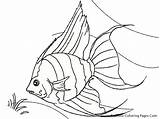Fish Coloring Tropical Realistic Angel Drawing Luau Colouring Printable Angelfish Hawaiian Drawings Line Sheet Printables Draw Sheets Coral Saltwater Reef sketch template