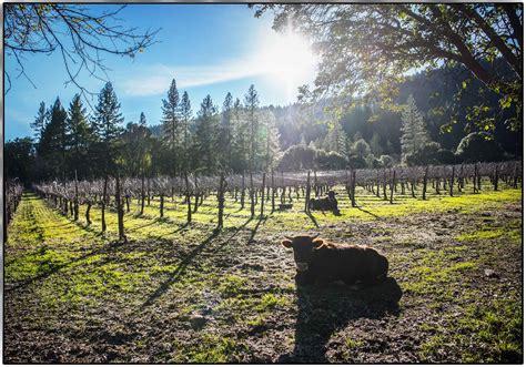 Frey Vineyards Blog Organic Farm Winter Update