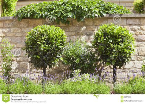 alberi da giardino piccolo alberi da giardino piccoli free alberi da giardino idee