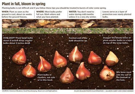 guide for fall bulb planting yard garden