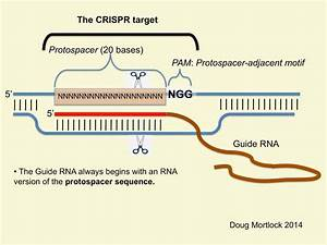 A Crispr Blog    Bibliography   Crispr Genomic Target