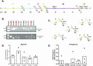 Chromosome Conformation Capture  3c  Assay Of Human Mogat1 In Hk