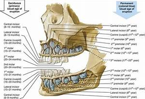 6: Periodontal Considerations in the Evaluation and ...