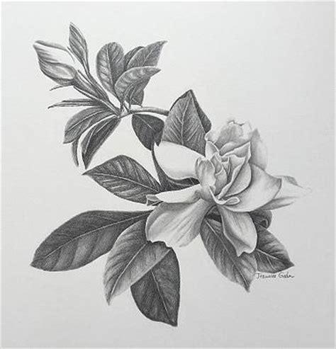 Gardenia Drawing by Gardenia Drawing By Jeannice Gordon