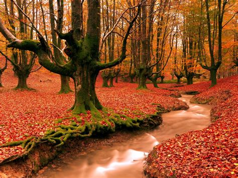 Colourful Autumn Background by Cool Desktop Wallpapers With Colorful Autumn Forest Hd