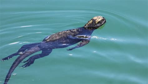 reptiles fish   common animals momme