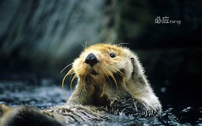 Bing Wallpapers Desktop Backgrounds Animals Res China