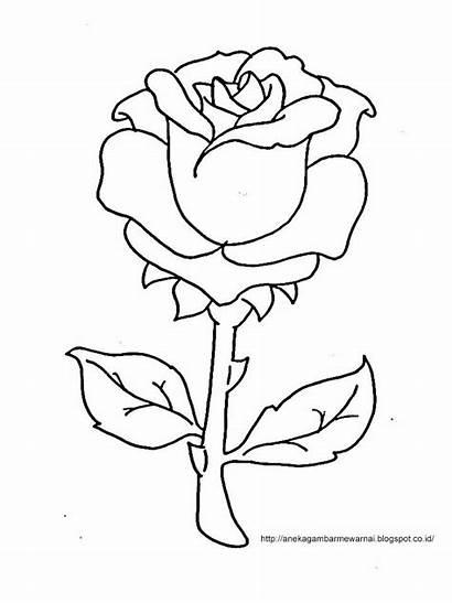Bunga Gambar Mewarna Mewarnai Untuk Mawar Anak