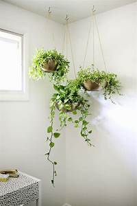 Indoor Garden Idea - Hang Your Plants From The Ceiling
