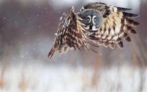 scared owl funny hd wallpaper