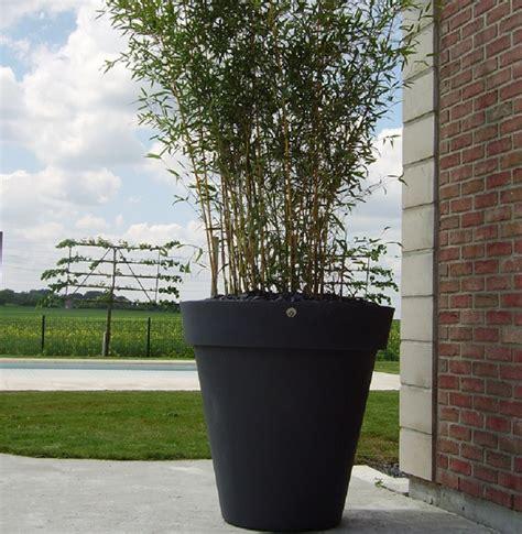 en pot exterieur lovely bambou en pot exterieur 11 jardini 232 re de bambous pendant la mauvaise saison terrasse