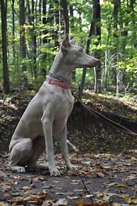 #doberman #pinscher #dogs | Dobie Friendzy | Pinterest ...