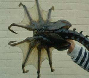 Giant Sea Spiders 3 Feet Wide!