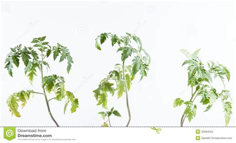 Seed Planters by Tomato Plant Stock Photography Image 30564522