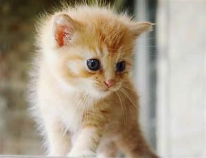 Orange Tabby Kitten | Orange tabby kittens, Beautiful ...