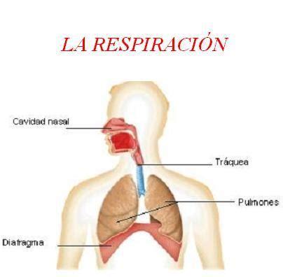 educacion fisica grupo 514 191 por qu 233 es malo respirar por la boca mientras se practica un deporte