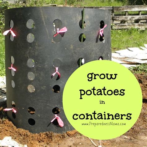 Creative Ways to Grow Potatoes in Containers