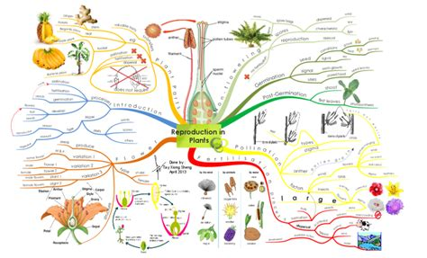 Create your own Mind Maps -Reproduction in Plants Mind