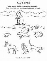 Prairie Coloring Dog Animals Sheets Grasslands Habitat Template Popular Drawings sketch template