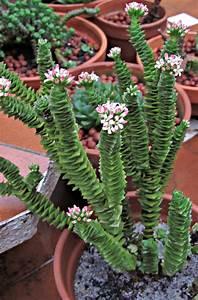 Cactus y Suculentas: Bones festes/Felices Fiestas/Bona Annada 2013