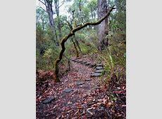 Dwellingup Bibbulmun Track