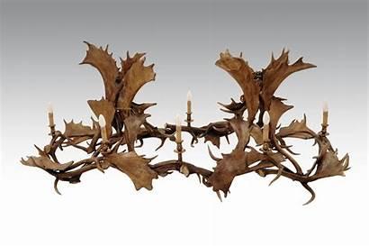 Fallow Antler Deer Chandelier Double Rectangular Antlers