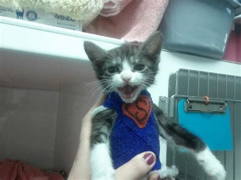 Superkitten Saved By Vets (9 Pics)