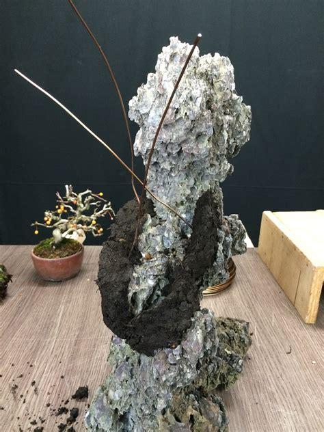 cr 233 ation d ishizuki davec un pin noir shohin bonsai shohin