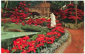 Christmas Lights In Columbia Maryland Missouri St Louis Forest Park Christmas Poinsettias 1962