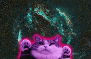 galaxy cats galaxy cat gif