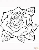 Coloring Rose Roses Outline Pages Colour Printable Transparent Supercoloring Flowers Drawing Zeichnen Tattoo Paper Colorings Styles Kid Blumen Att Zeichnung sketch template