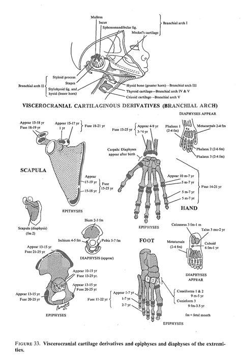axial skeleton labeling worksheet www imgkid the