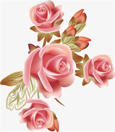 vector rose vector rose flowers png  vector
